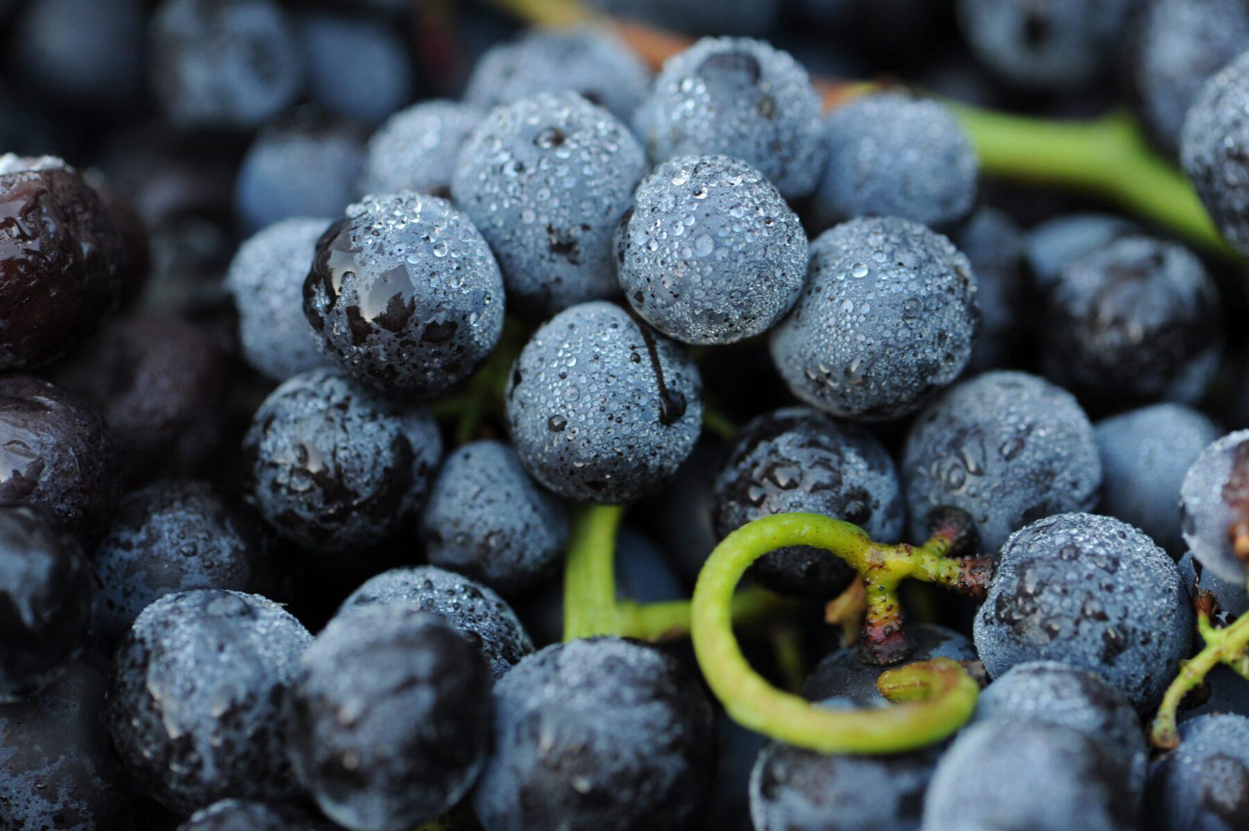 Trauben Obrecht Wein